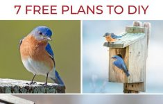 Eastern Bluebird House Plans Best Of Bluebird Houses The Definitive Guide 7 Free Plans