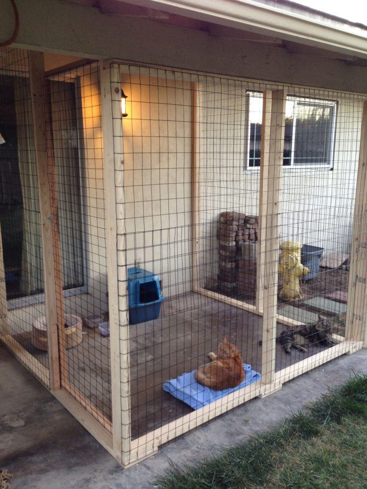 Cat Houses Outdoor Plans 2020