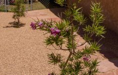 Desert Willow Tree Facts Fresh This Is How You Need To Care For A Desert Willow Tree