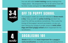 Life Stages Crate Instructions Beautiful The Stages Of Puppy Development
