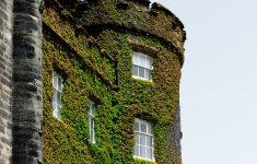 Moss Building & Design New Grey Castle Covered With Green Moss Photo – Free Wall Image