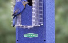 Sparrow Resistant Bluebird House Plans Beautiful Bird Safe Bluebird House & Pole With Noel Guard
