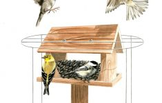 Sparrow Resistant Bluebird House Plans Lovely Attracting Bluebirds Dealing With Predators And Problems