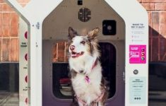 Air Conditioned Dog House Plans Luxury Air Conditioned Dog Houses Are Popping Up Across The Country