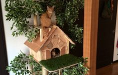 Indoor Cat House Plans New 18 Cat House Design Modern Cat Houses Of 2020 The