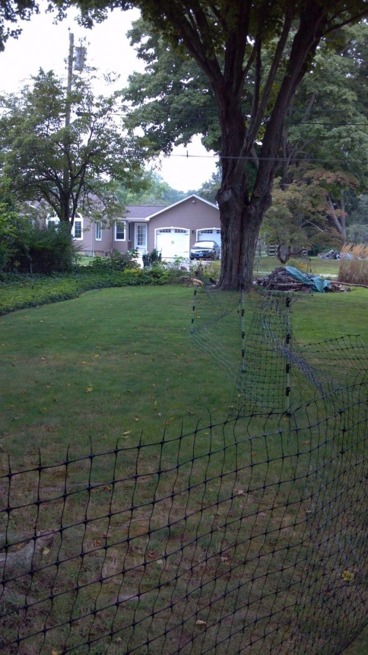 Temporary Fencing Options for Dogs 2021