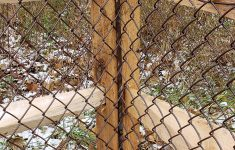 Brown Privacy Slats For Chain Link Fence Elegant ✓ 35 Magnificient Backyard Privacy Chain Link You Want To