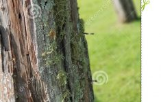 Mossy Fence Elegant Old Farm Fence Post Stock Image Image Of Post Farm
