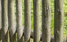 Mossy Fence New Mossy Wooden Fence Image & Free Trial