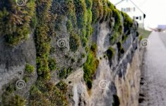 Mossy Fence Unique Mossy Fence Stones Stock Photo Image Of Grows Moss