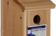 Wooden Bird House Plans Luxury Woodlink Wooden Bluebird House Model Bb1