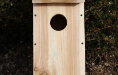 Cedar Bird House Plans Inspirational 38 Free Birdhouse Plans