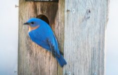 Mountain Bluebird House Plans Best Of 13 Free Birdhouse Plans Easy Pdf Video Instructions