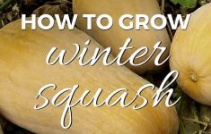 Spaghetti Squash Growing Stages Awesome How To Grow Winter Squash