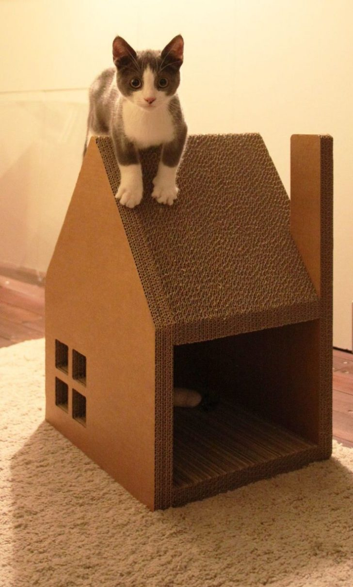 Dog House Plans for Small Dogs 2020
