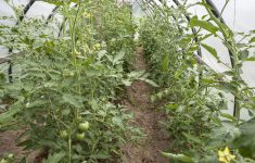 Hoop House Greenhouse Plans New Hoop House Plans Free The Best You Ll Find The Internet