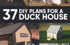 Chicken Coop House Plans Fresh Chicken Coop Do You Want To Build A Duck House Or Coop For