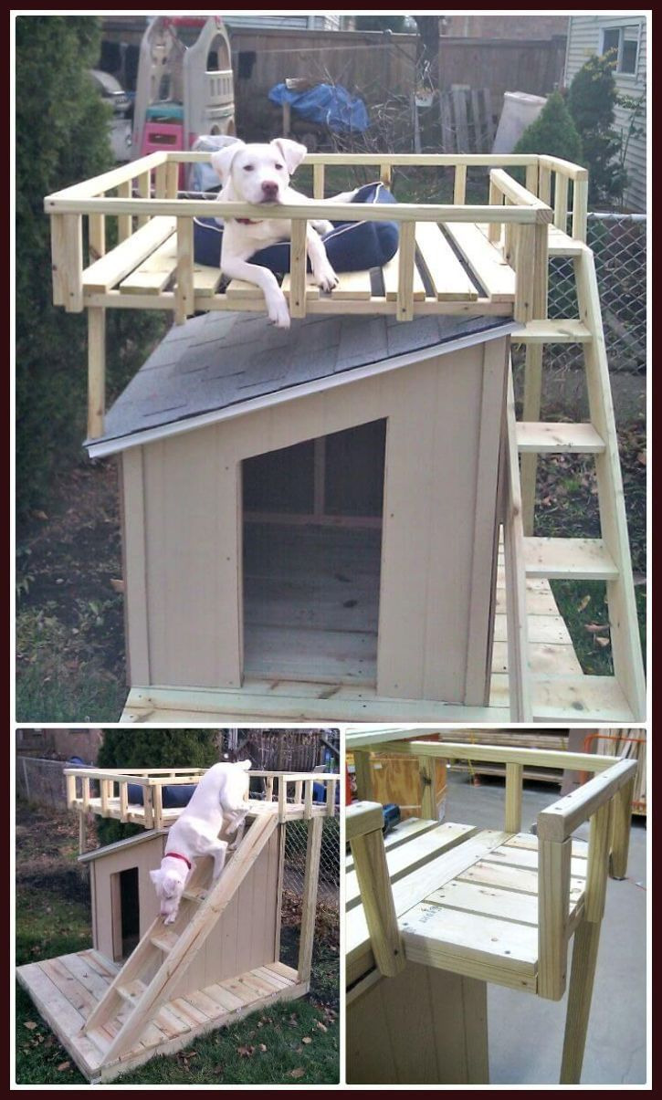 Double Dog House Plans Fresh Pin by Anna Lisa On Doggie ❤️ In 2020