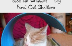 Feral Cat House Plans Lovely 12 Diy Outdoor Cat House Ideas For Winters