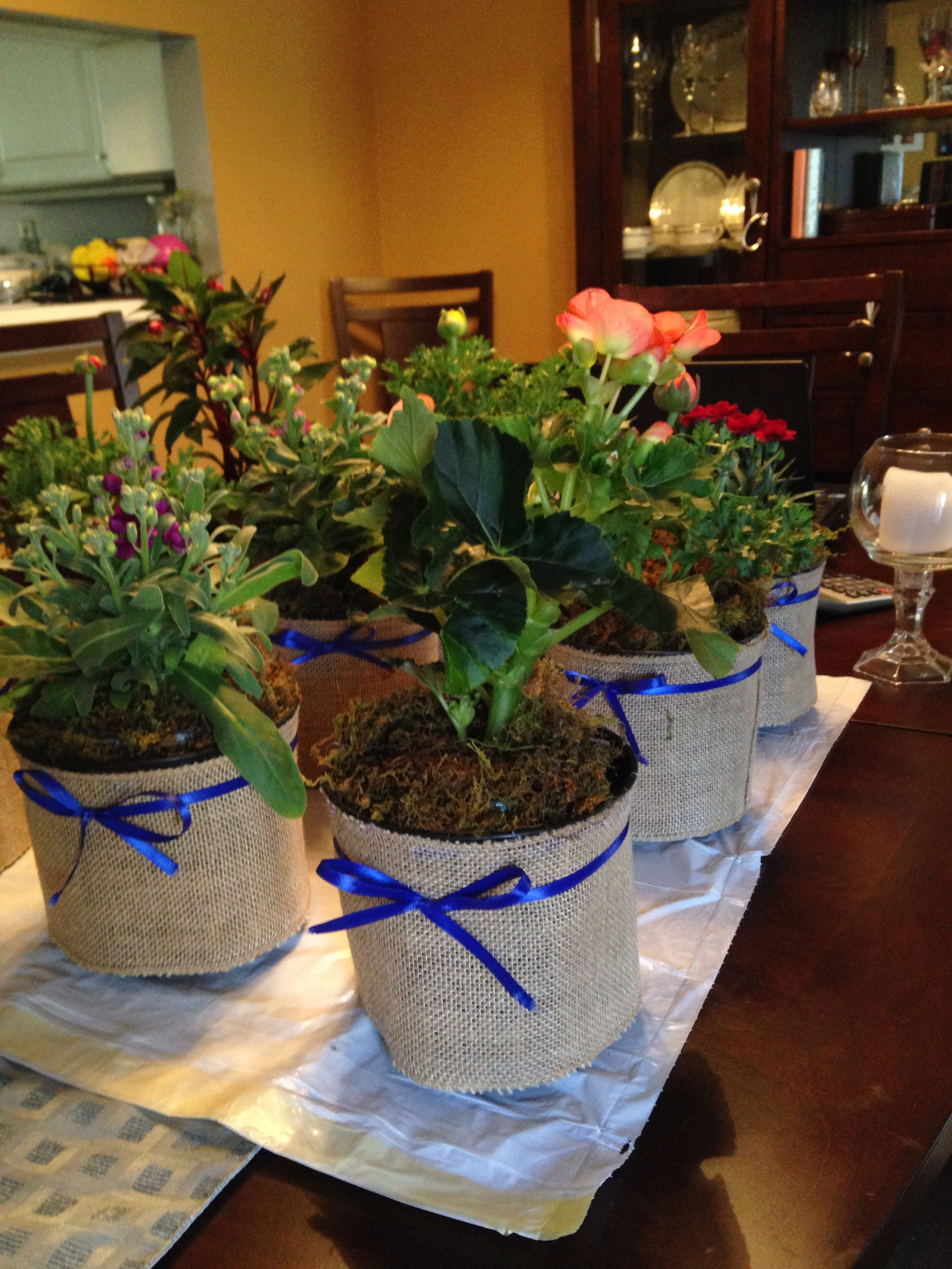Basil Plant Home Depot Fresh Potted Plants From Home Depot A Lil Ribbon and Burlap Wrap