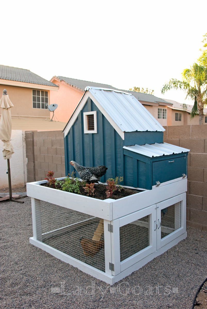 Free Chicken House Plans Awesome Small Chicken Coop with Planter Clean Out Tray and Nesting