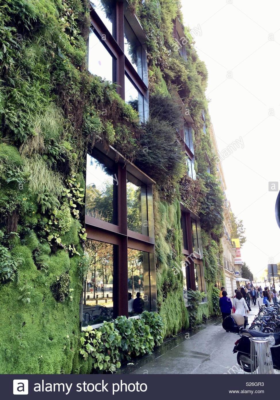 Moss Building & Design Elegant Building In Paris with Green Moss On Stock