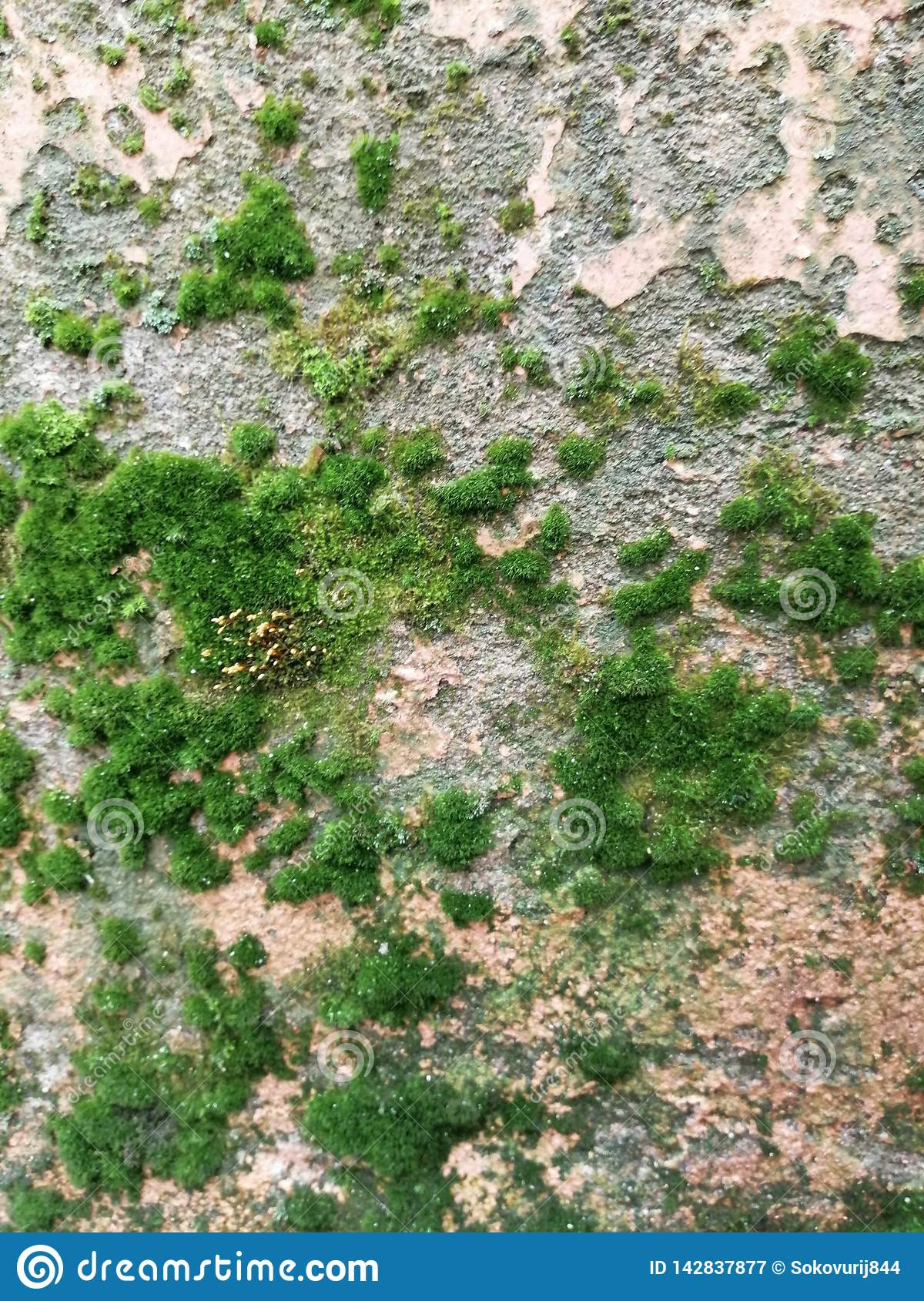 Moss Building & Design Luxury Old Wall with Moss Stock Image Image Of Texture Surface