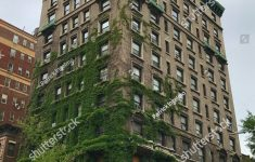 Moss Building & Design New Building Covered Fern Moss New Stock Edit Now