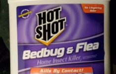 """Ortho Bed Bug And Flea Killer Review Lovely """"hot Shot Hg 1 Count Bedbug And Flea Home Insect Killer 1 Gallon"""""""