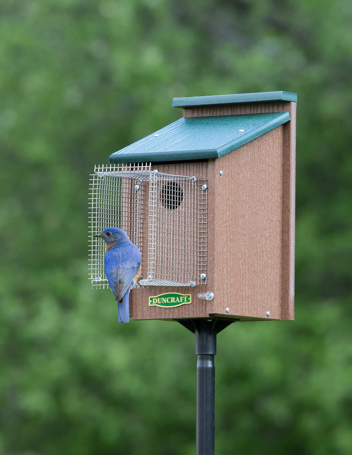 Sparrow Resistant Bluebird House Plans Best Of Bluebird House with Pole & Noel Guard