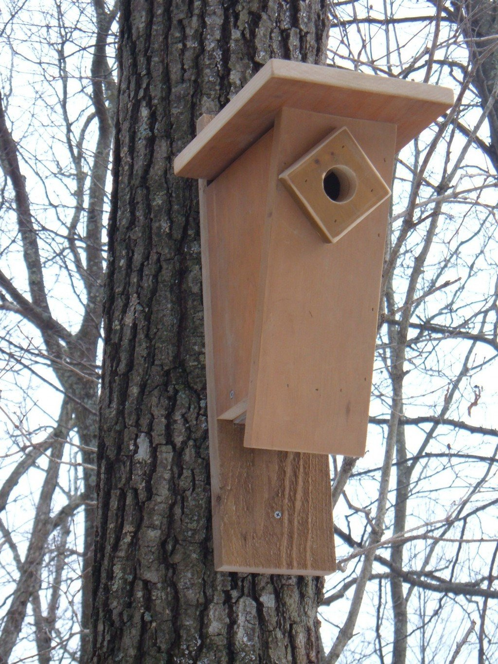 Sparrow Resistant Bluebird House Plans Best Of How to Build A Peterson Slant Front Style Bluebird House