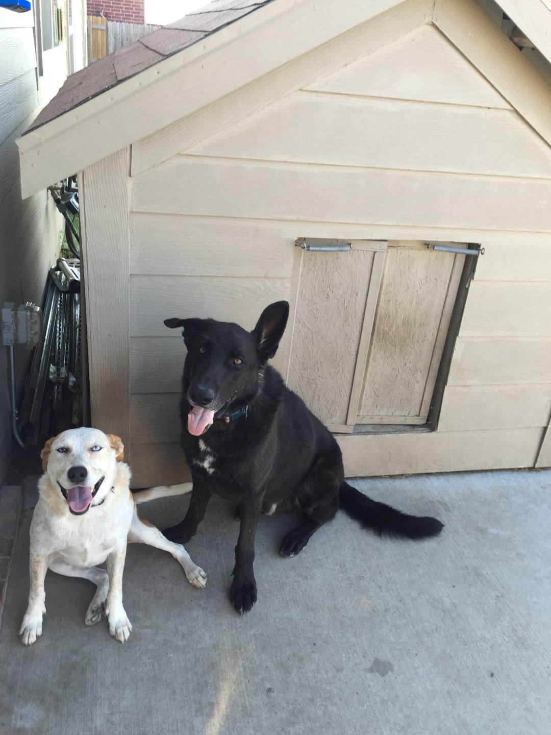 Air Conditioned Dog House Plans Lovely I Built My Two Dogs A Doghouse Equipped with An Air