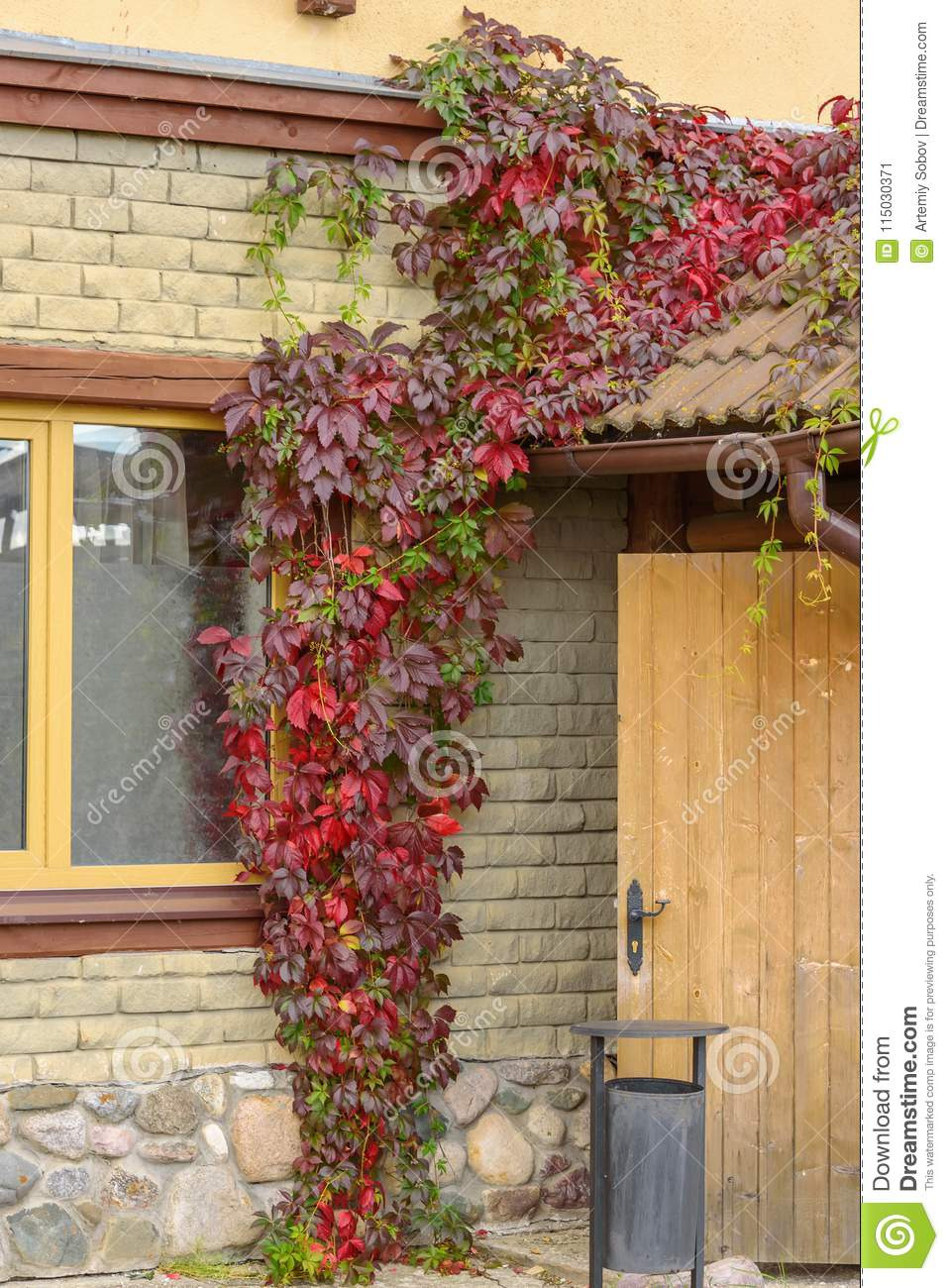 entrance to house covered red decorative grapes autumn