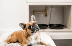 House Plans With Pet Rooms Best Of Modern Farmhouse White And Black Mud Room Dog Room With