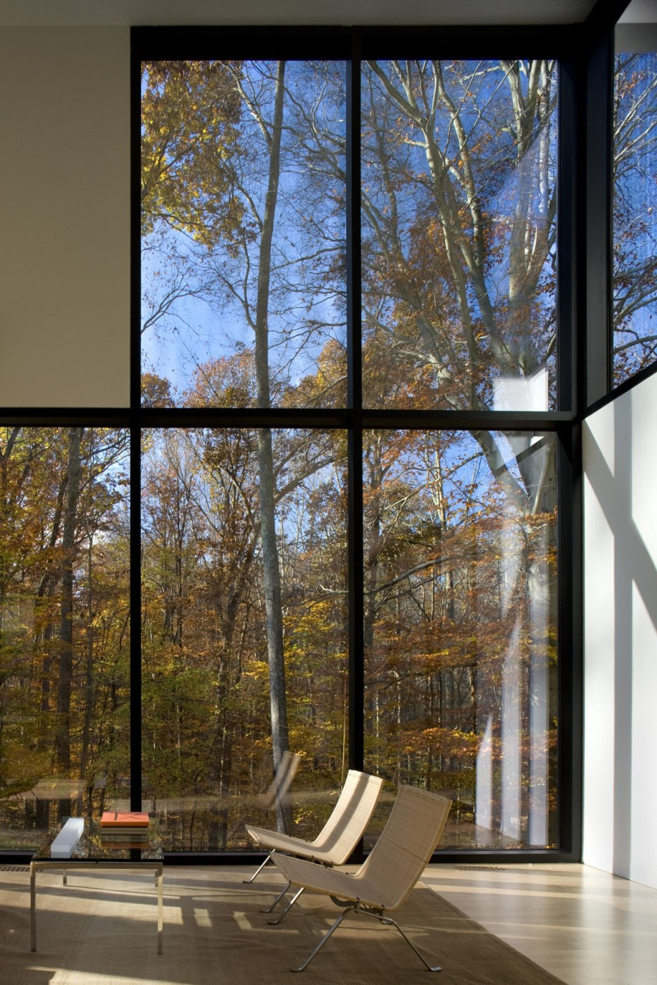 rising glass windows for maximum forest view