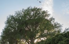 Desert Willow Tree For Sale Albuquerque Luxury Meet Our State Champion Trees