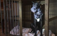 Great Dane Dog House Plans Unique Xxl Single Doggie Den For Giant Breeds With Images