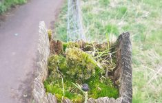 Mossy Fence Inspirational I Thought This Little Mossy Oasis In An Old Fence Post Was