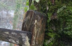 Mossy Fence Inspirational Old Country Fence Leaning On A Mossy Tree Stock