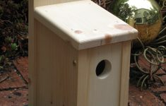Wood Bird House Plans Beautiful Protect Your Bird House From Predators