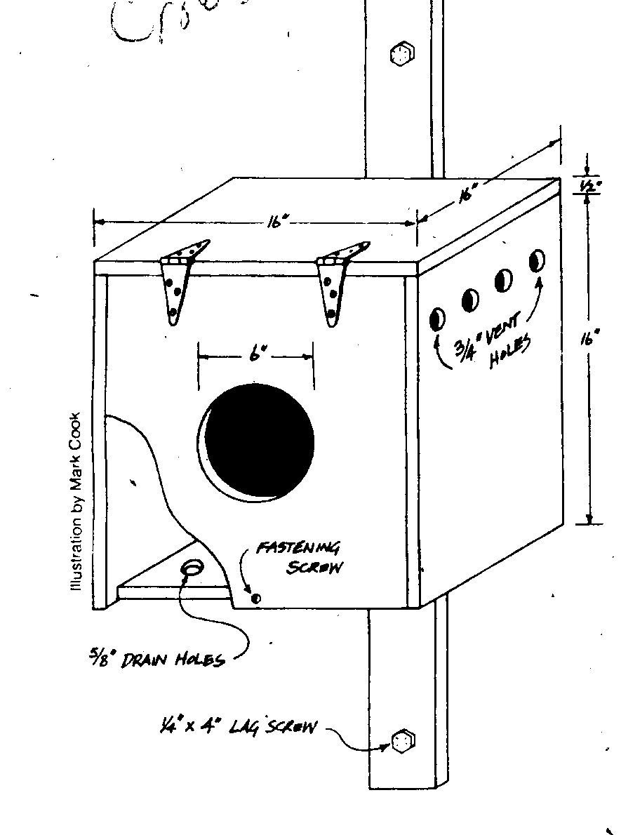 Owl Bird House Plans Awesome Beautiful Barn Owl Boxes Plans