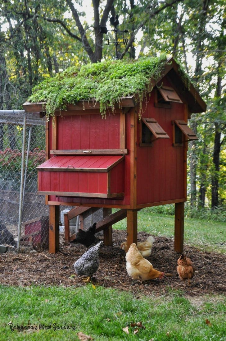 Plans for Chicken Coops Hen Houses 2021