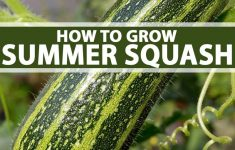 Spaghetti Squash Growing Stages New Guide To Growing Summer Squash