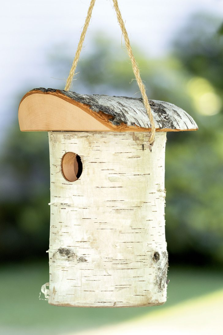 Bird House Plans for Sparrows 2021