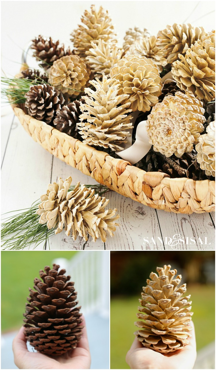 How to Bleach Pinecones 2